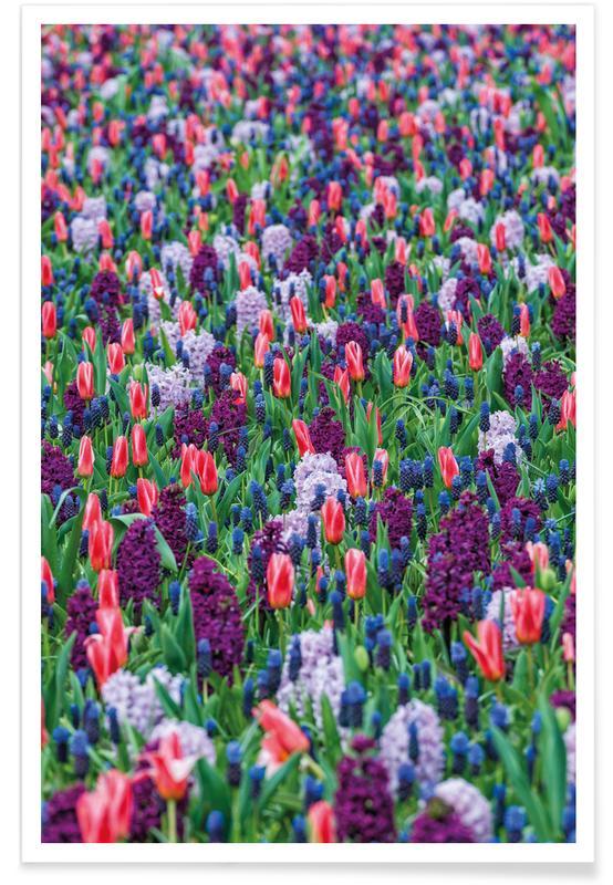 Tulpen, Tulip Field Purple poster