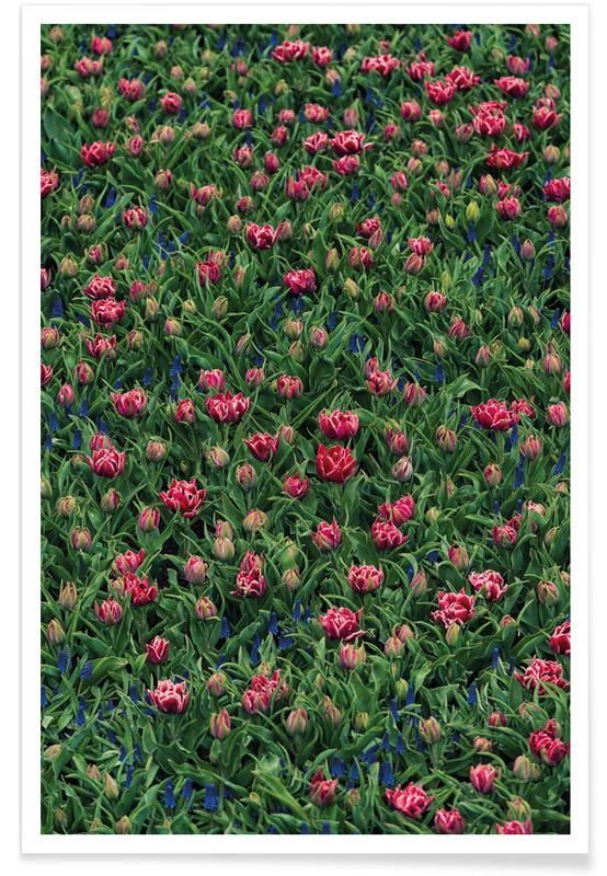 Tulips, Tulip Field Pink Poster