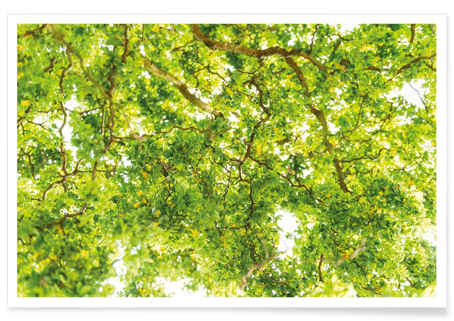 Bomen, Hazel Tree poster
