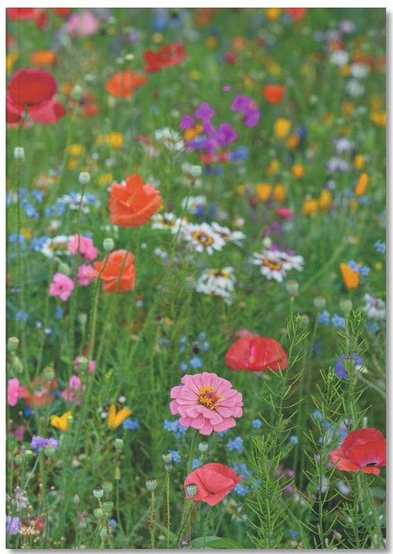 Wild Flowers Field 1 Notebook
