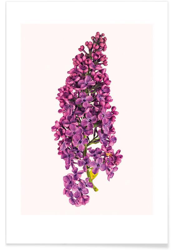 Geburtstage, Glückwünsche, Flower 2 -Poster