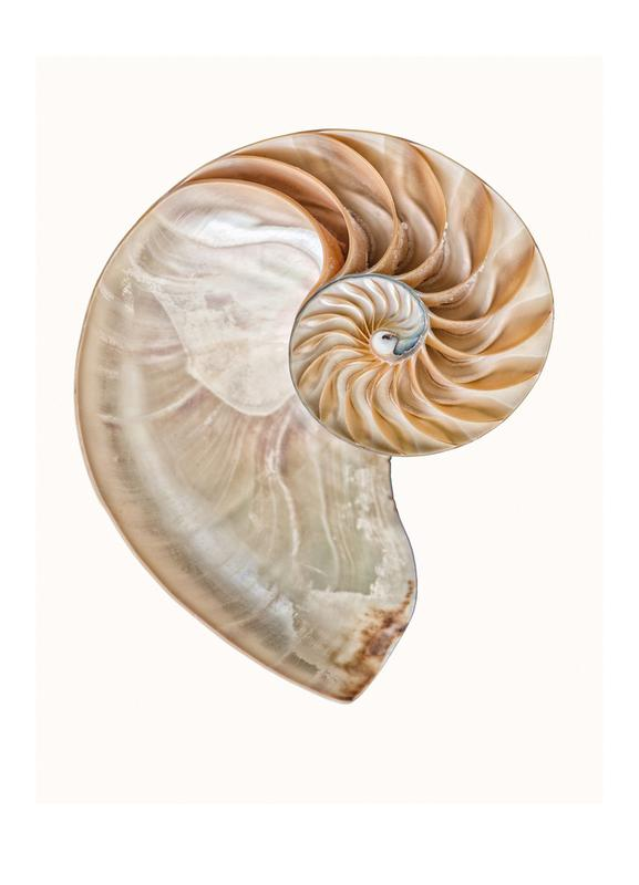 Shell 4 Canvas Print