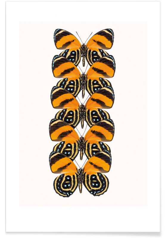 Vlinders, Butterfly poster
