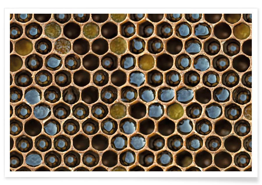 Mønstre, Bier, Bee Pattern Plakat
