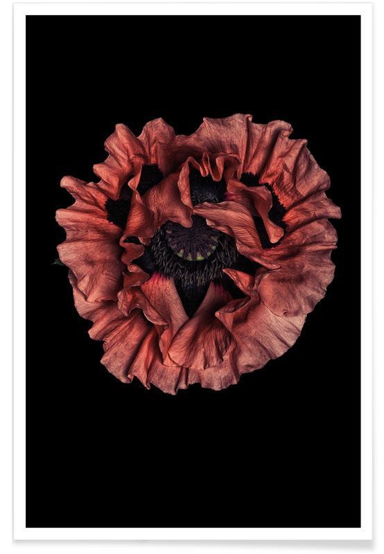 Coquelicots, Poppy Flower affiche