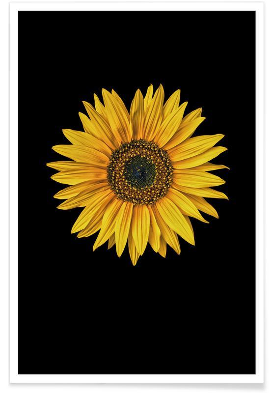 Sunflowers, Sunflower Poster