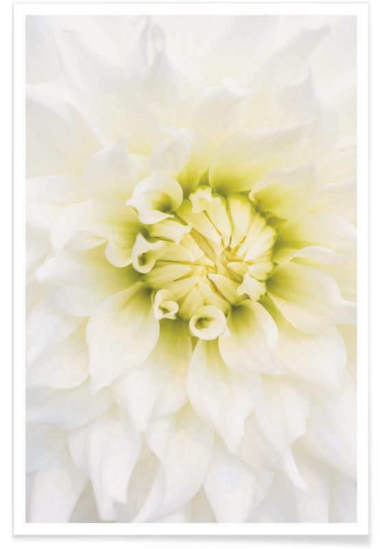 , White Dahlia poster