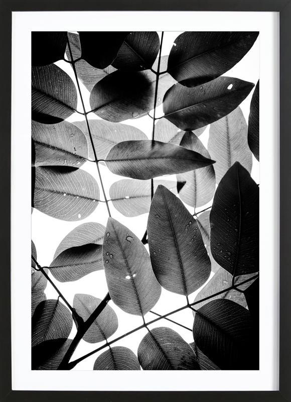 Experiments with Leaves II affiche sous cadre en bois