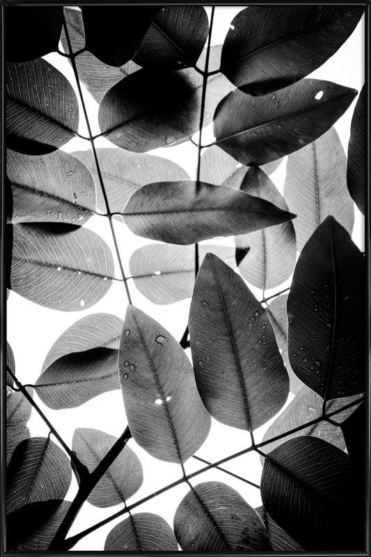 Experiments with Leaves II affiche encadrée