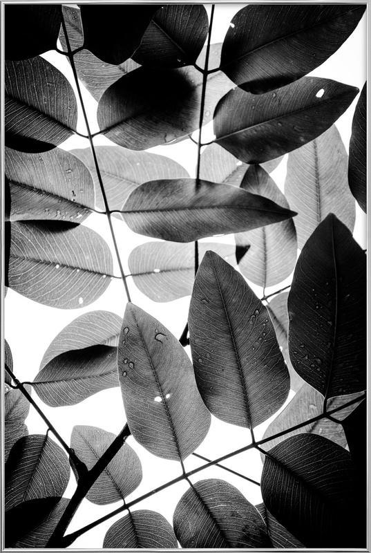 Experiments with Leaves II affiche sous cadre en aluminium