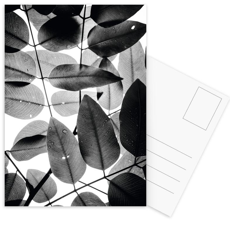 Experiments with Leaves II cartes postales