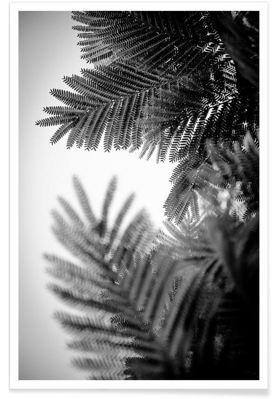 Black & White, Leaves & Plants, Palms, Natural Geometries V Poster