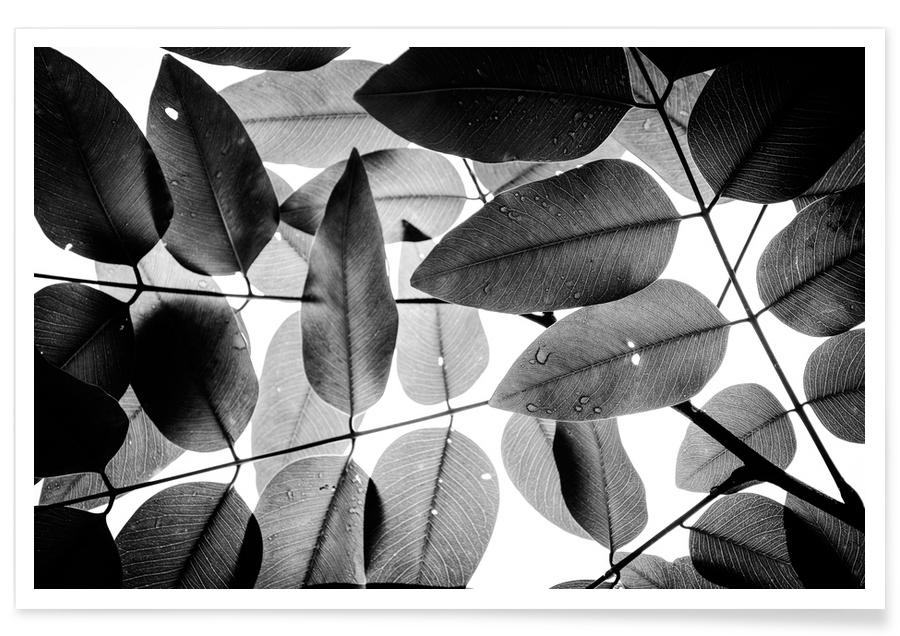 Experiments with Leaves 2 affiche