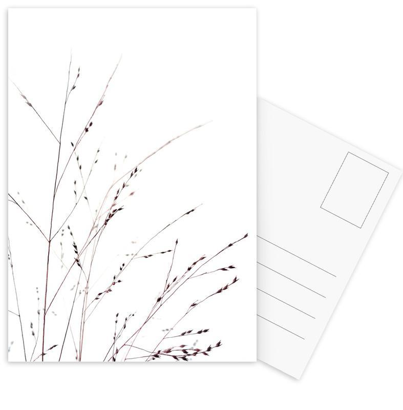 , Gräser cartes postales