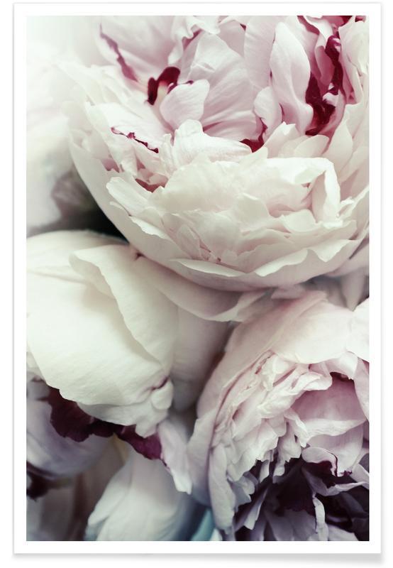 Roses, Anniversaires de mariage et amour, Mariages, Pfingstrosen affiche