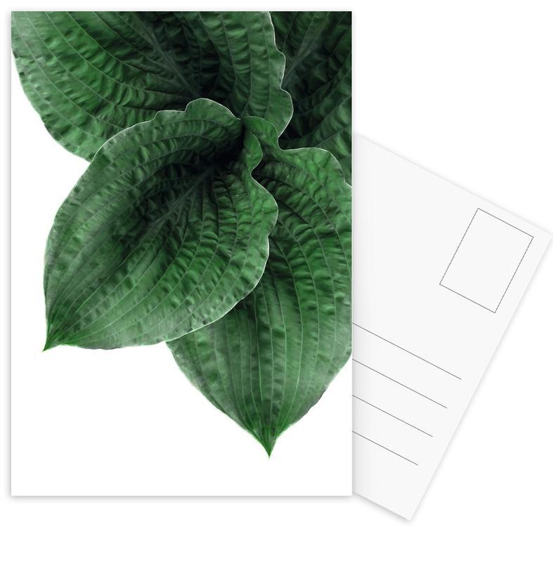 Feuilles & Plantes, Teichpflanze cartes postales