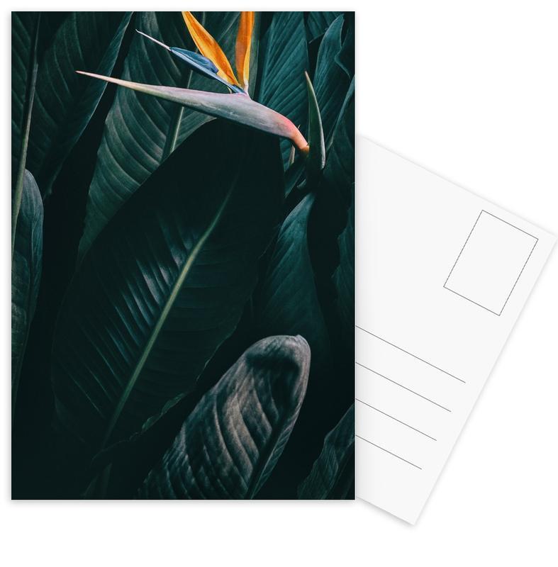 Feuilles & Plantes, Bird of Paradise cartes postales