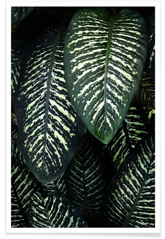 Feuilles & Plantes, Jungle 1 affiche