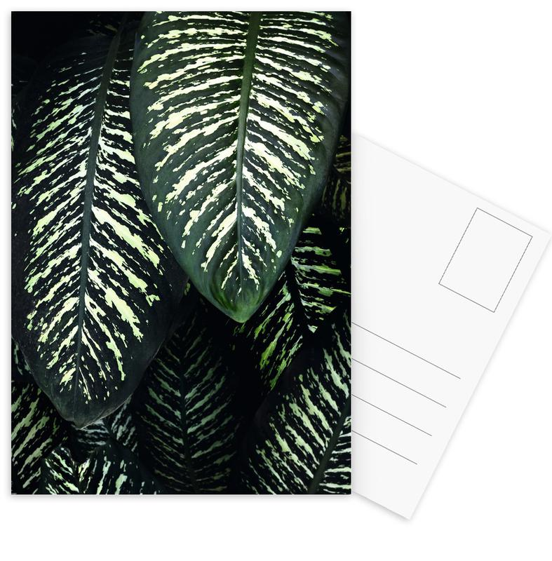 Feuilles & Plantes, Jungle 1 cartes postales