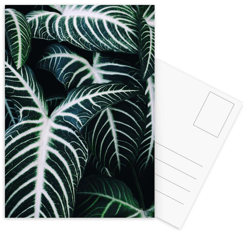 Feuilles & Plantes, Jungle 2 cartes postales