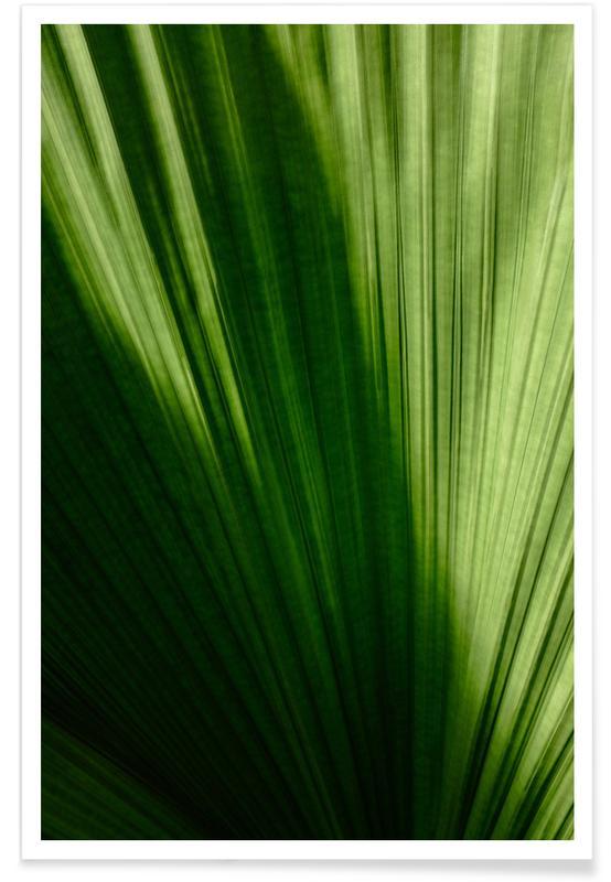 Feuilles & Plantes, Palmenblatt affiche