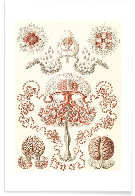 Blumenquallen Poster