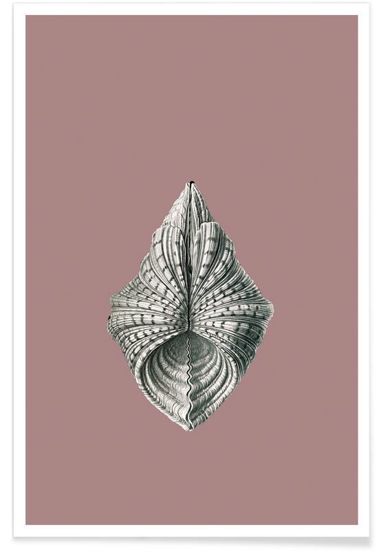 Vintage, Muscheln Rose poster