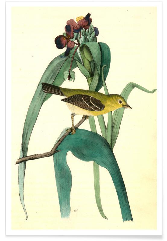 Vintage, Kleine hoofdvliegenvanger poster