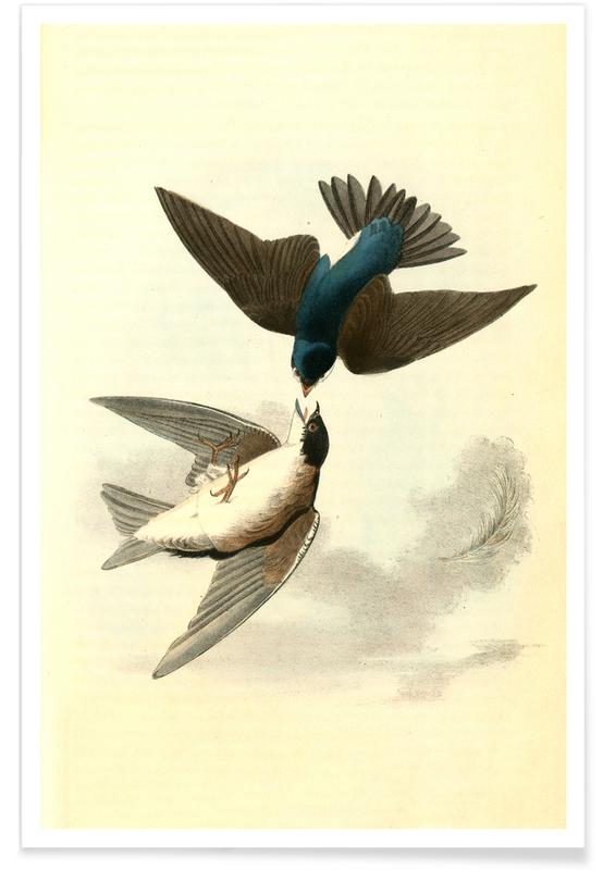 White-bellied Swallow Poster