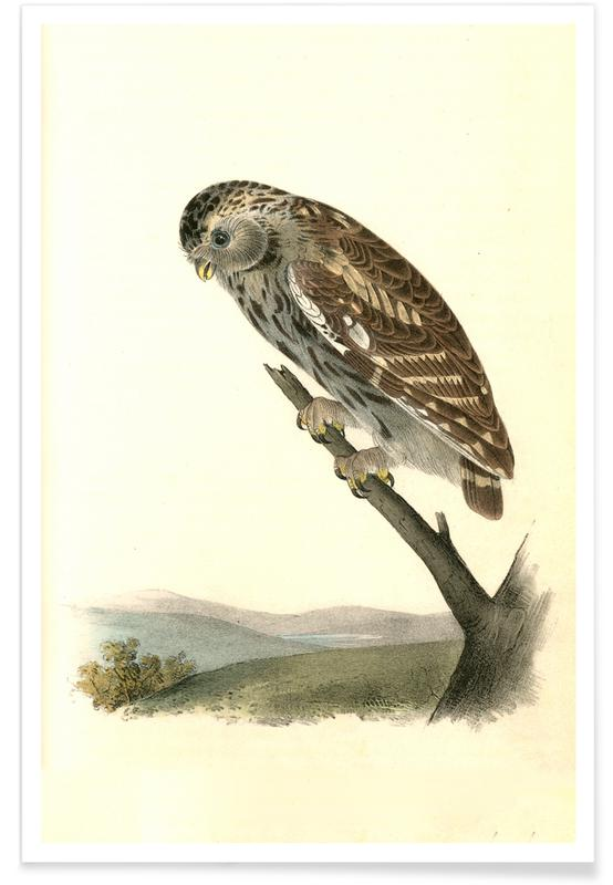 Little Night-Owl Poster