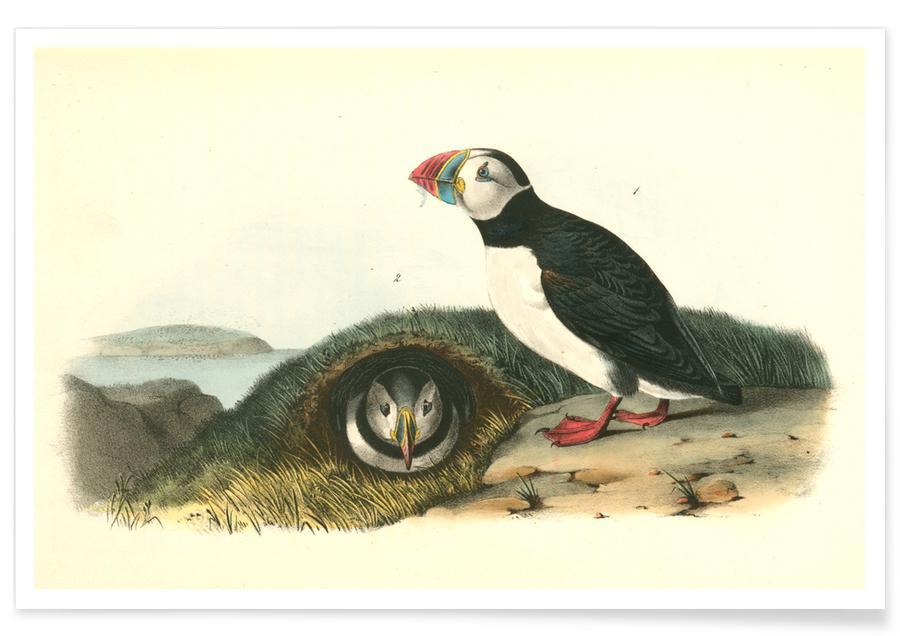 Vintage, Pinguïns, Arctische papegaaiduiker poster