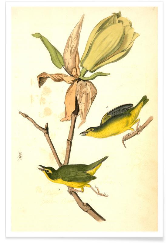 Canaris, Vintage, Bouscarle à mouches du Kentucky affiche