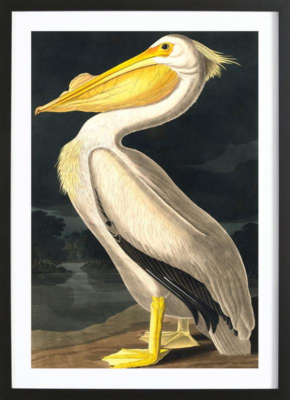 American White Pelican (by List Collection) Framed Print