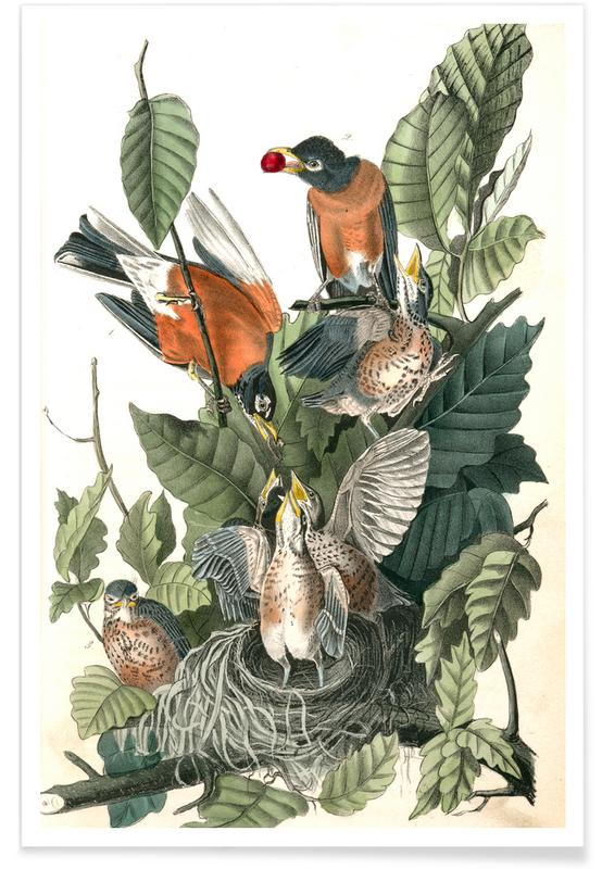 Vintage, Bladeren en planten, Amerikaanse Robin poster