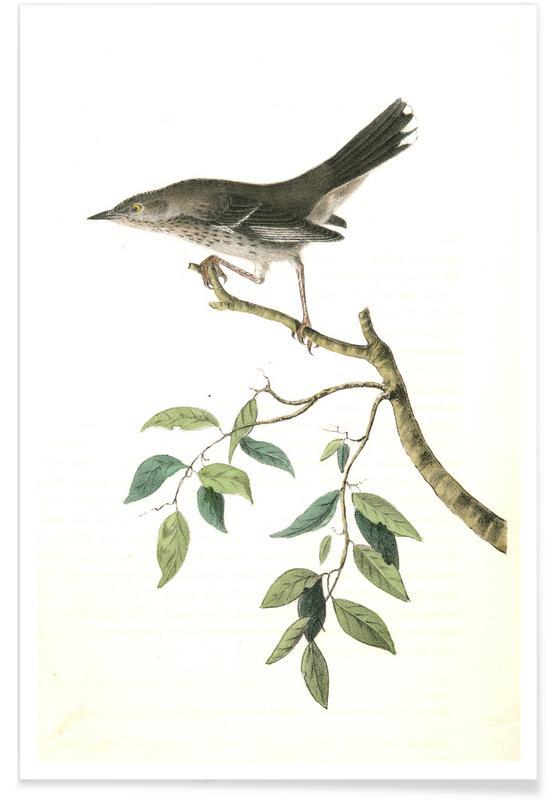 Vintage, Spottende vogel in de bergen poster