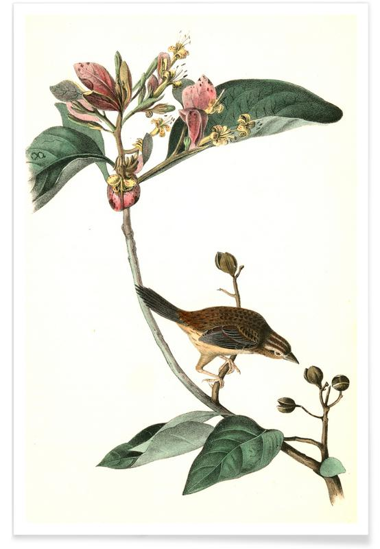 Bachman's Pinewood Finch Poster