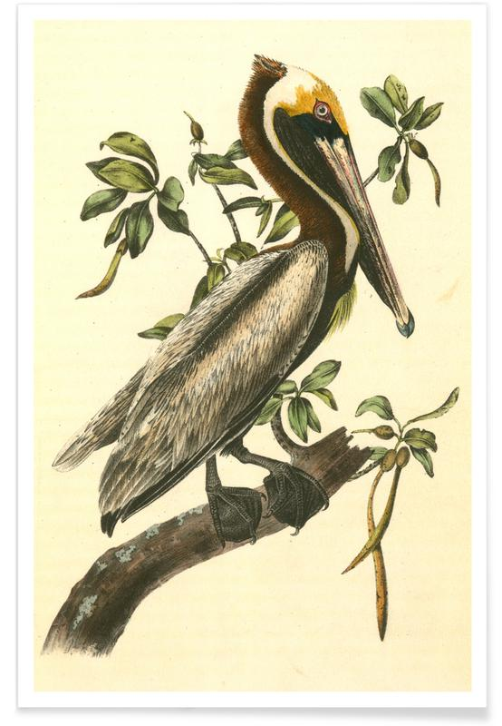 Pelicans, Vintage, Brown Pelican Poster