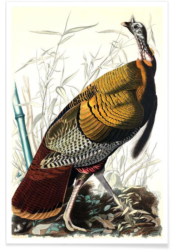 Vintage, Pelikanen, Grote Amerikaanse haan, 1827 poster