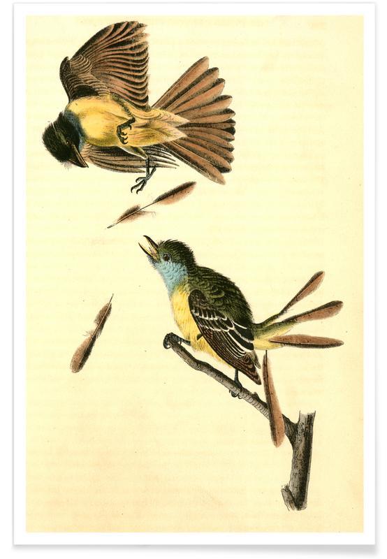 Vintage, Blauwe Vlaamse gaai, 1831 poster