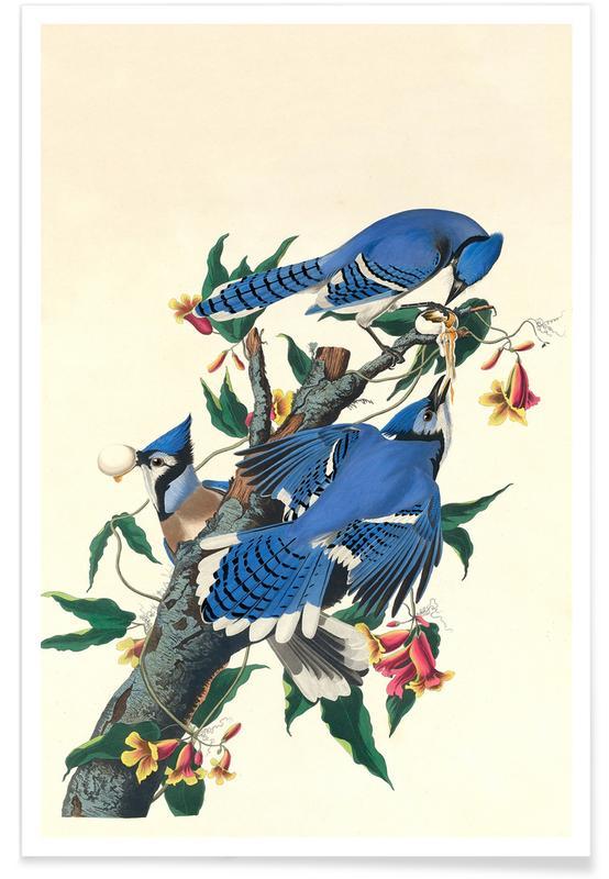 Vintage, Geai bleu, 1831 affiche