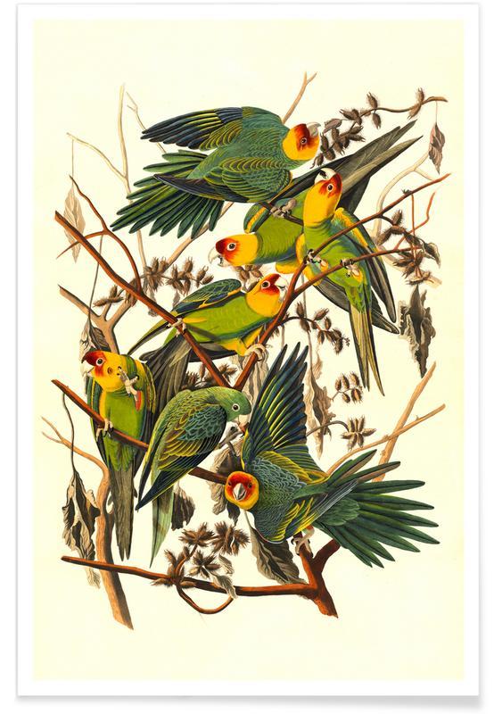 Perroquets, Vintage, Perroquet de Caroline, 1827 affiche