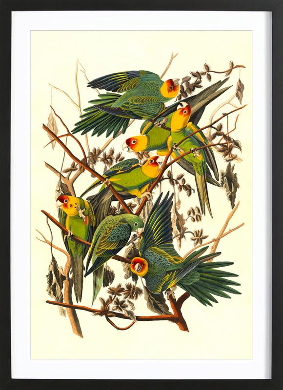 Carolina Parrot, 1827 (by List Collection) affiche sous cadre en bois