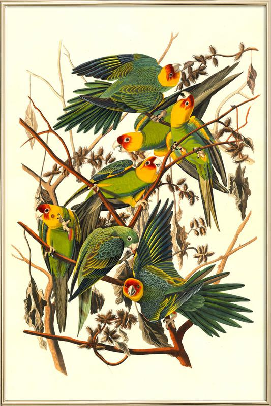 Carolina Parrot, 1827 (by List Collection) poster in aluminium lijst