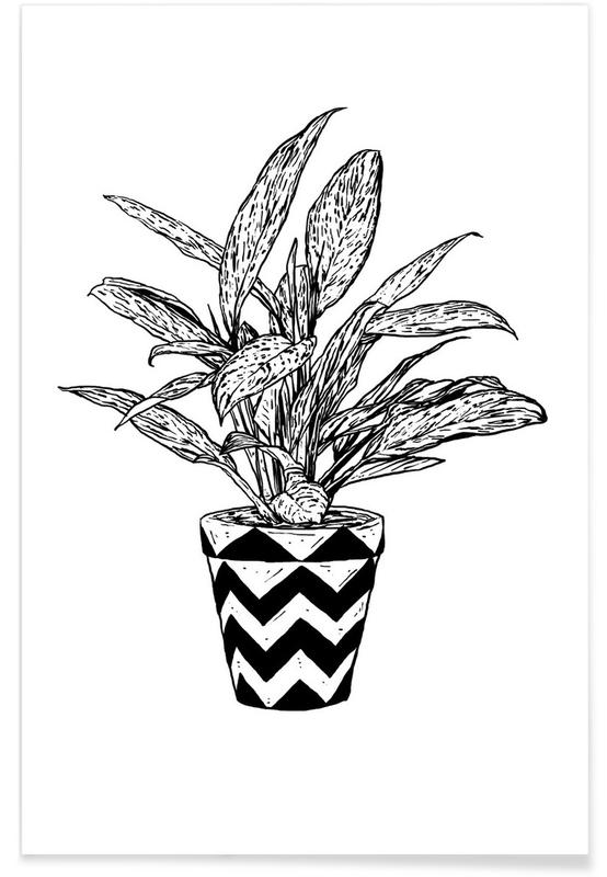 Feuilles & Plantes, Chinese Evergreen affiche