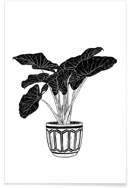 Black & White, Alocasia Poster