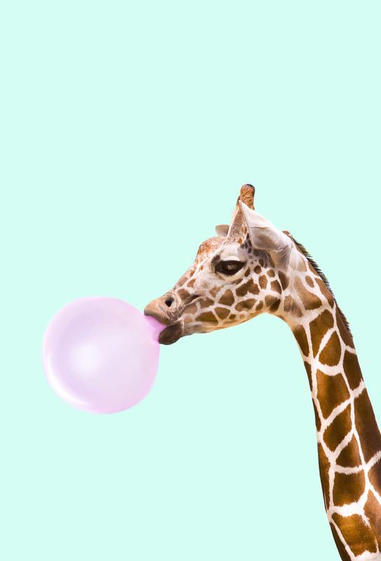 Giraffe -Alubild