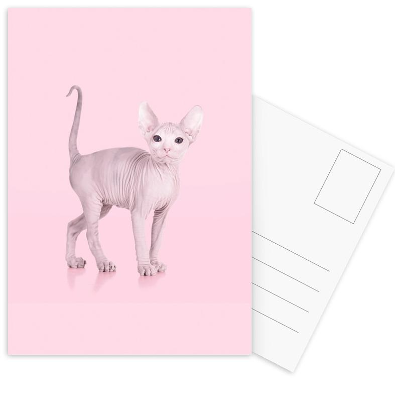 Sphynx Cat Postcard Set