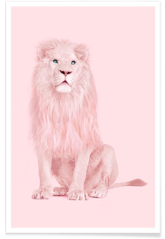 Løver, Albino Lion Plakat