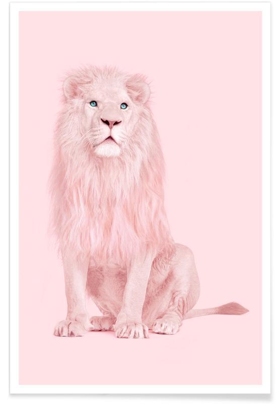 Leeuwen, Albino Lion poster