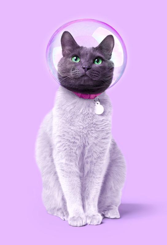Space Cat -Alubild